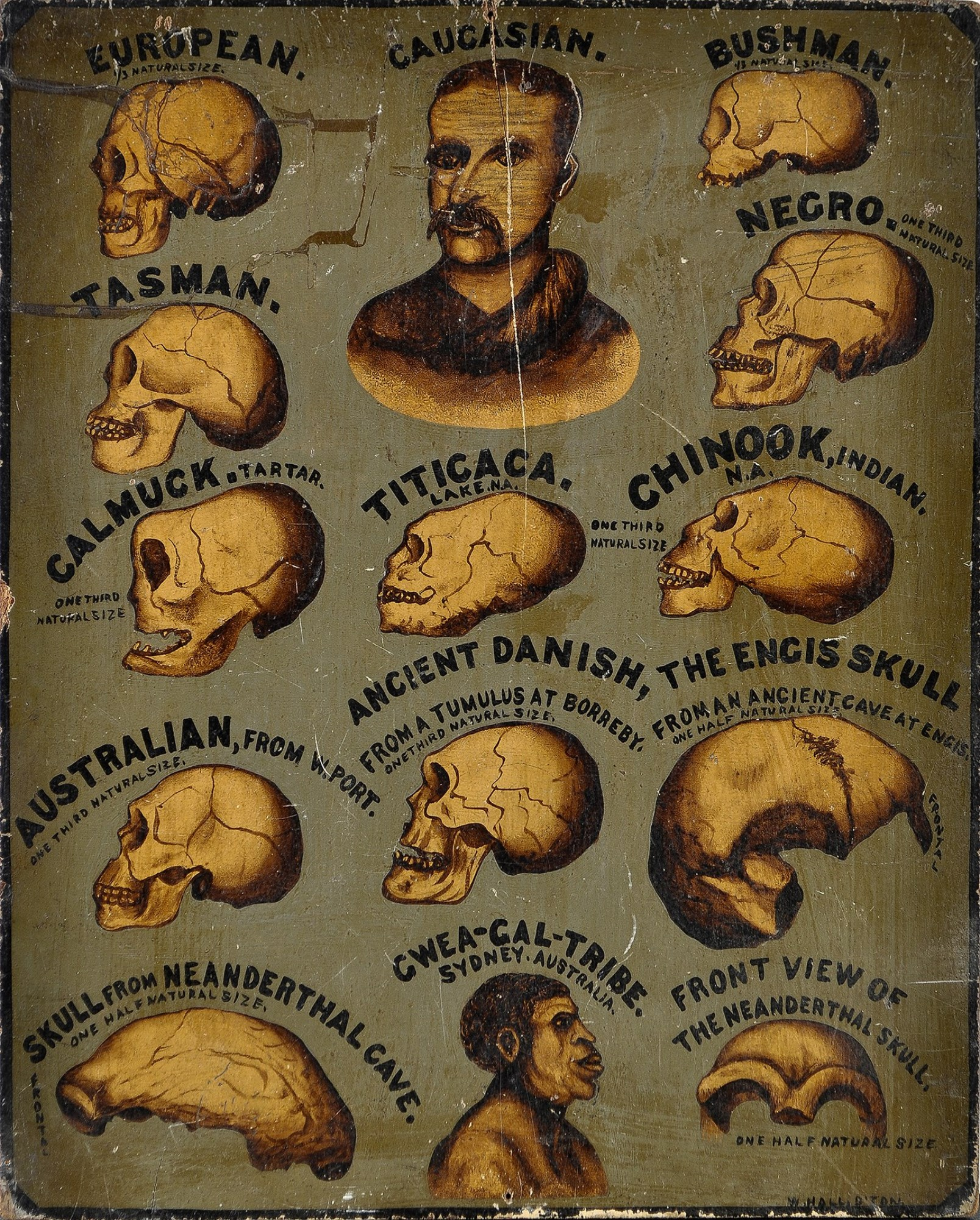 A 19th Century painted panel of 'The human skull throughout the ages'