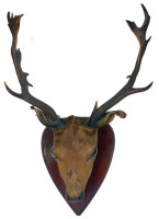 Lot 451-A taxidermy stag's head, by H. Anning, Honiton,...
