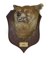 Lot 454-A taxidermy fox head, by Peter Spiner, Leamington,...