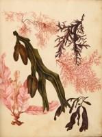 Lot 517-† Botanical Manuscript, 4to, contemporary red...