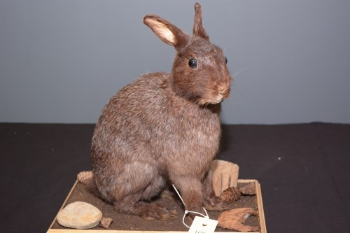 Lot 36-Taxidermy: a stuffed and mounted seated dark...