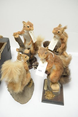 Lot 405 - Four late 20th-century taxidermy red squirrels