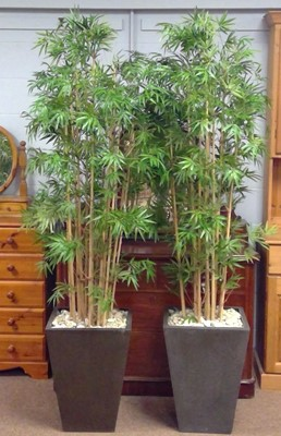 Lot 550 - A pair of bamboo effect plants