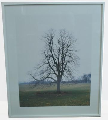 Lot 173 - Elizabeth McAlpine - colour photograph.