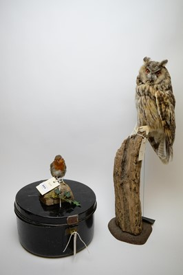 Lot 241 - Two taxidermy specimens; and a tin metal box.