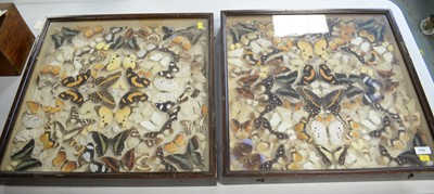 Lot 534 - Early 20th Century Lepidoptera specimen collection
