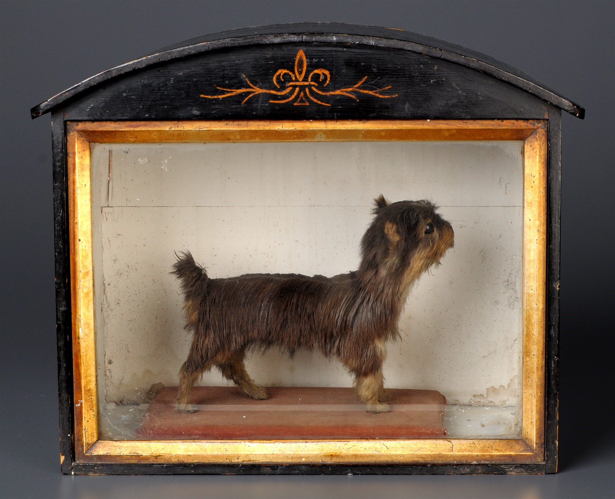 An early 20th Century taxidermy miniature Terrier